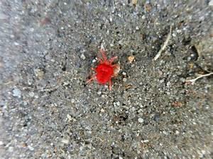 Winzige Rote Tierchen : kaaba on pirsch seite 298 esoterik forum ~ Lizthompson.info Haus und Dekorationen