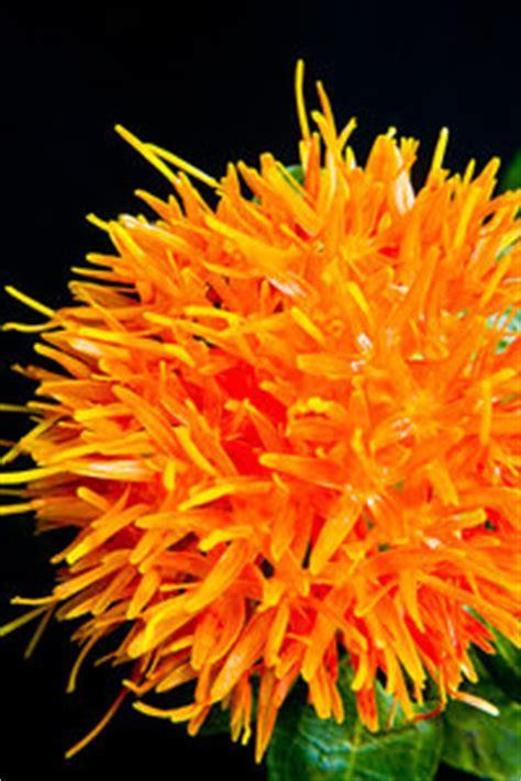 stock  rgbstock  stock images orange
