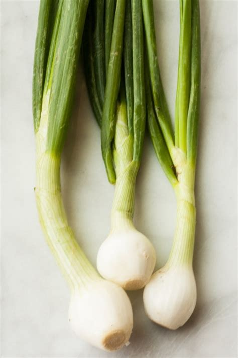 what is a scallion difference between scallions and green spring onions the kitchn