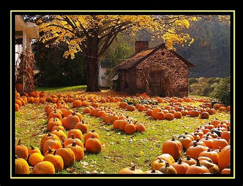 Desktop Fall Backgrounds Pumpkins by 47 Free Fall Wallpapers With Pumpkins On Wallpapersafari