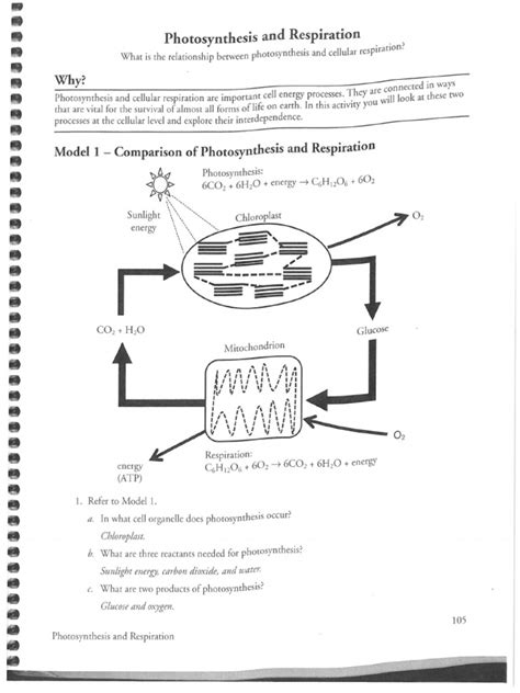 respiration  photosynthesis key