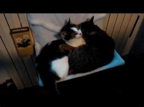 come costruire un amaca come costruire un amaca da calorifero per gatti fai da