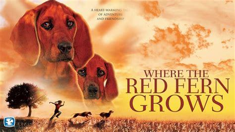 red fern grows