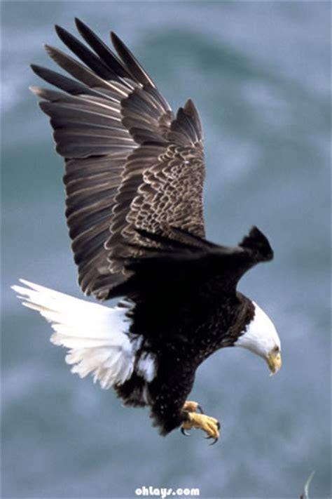 gopdebates wallpaper eagle