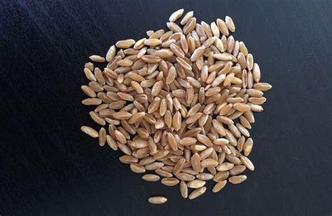 dove comprare i fiori di bach grano russello propriet 224 uso e dove trovarlo cure
