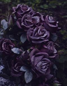 sad dark blue flowers nature color violet darkness gothic ...
