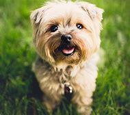 Cute Boy Dog Names