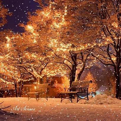 Winter Lights Scenes Night Snowy Snow Xmas