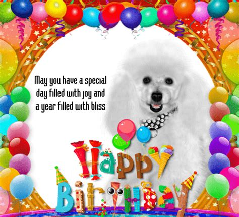 cute birthday card   pet  pets ecards