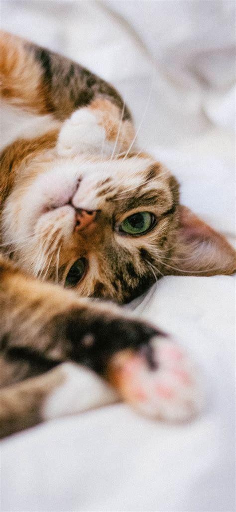 gambar kucing kartun aesthetic