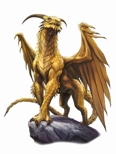 Dragon Gold Adult Pathfinder Bestiary Dnd Dragons