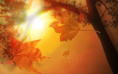 Orange Fall Wallpaper by Orange Autumn Wallpapers Hd Wallpapers Id 6305