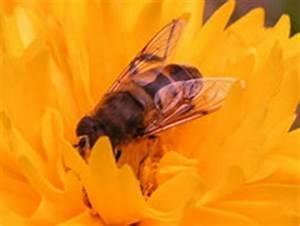 Läuse Natürlich Bekämpfen : insektenstiche flohbisse l usebefall bettwanzenbisse ~ Whattoseeinmadrid.com Haus und Dekorationen