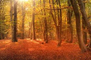 Vibrant Autumn Fall Forest Landscape Image Photograph by