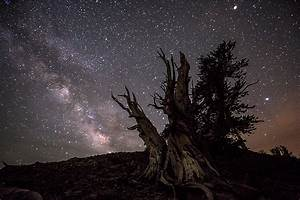 2016 Ancient Bristlecone Pine Forest Night Sky Photography ...