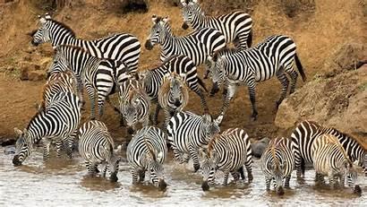 Animals Wallpapers Wild 1080p Mac