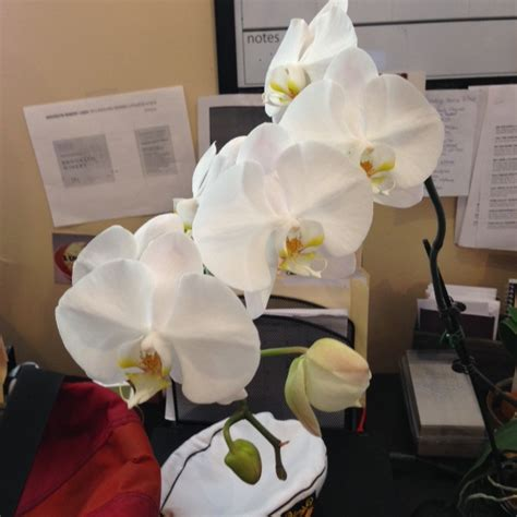 how to make orchids bloom again how do i get my orchid to bloom again