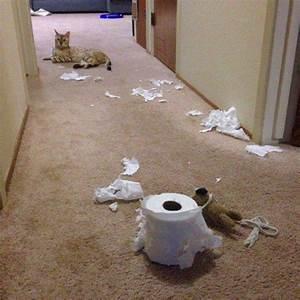Le tribunal du net animaux for Ordinary les danger a la maison 17 les hamsters pour tout savoir sur les hamsters