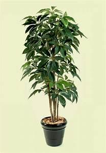 Robuste Zimmerpflanzen Groß : moderne zimmerpflanzen als frische deko f rs zuhause ~ Sanjose-hotels-ca.com Haus und Dekorationen