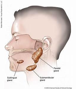 Salivary Gland Cancer  Medical Illustrations