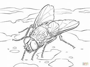 House Fly coloring page | Free Printable Coloring Pages