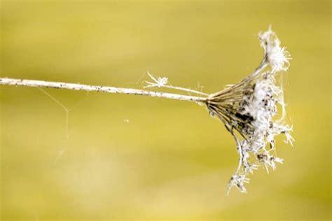 รูปภาพฟรี: พื้นหลัง ดอกไม้ มาโคร ภาพ