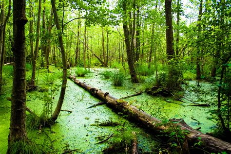 hd swamp wallpapers pixelstalknet
