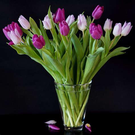 vase für tulpen tulpen in der vase 5 tipps f 252 r eine l 228 ngere tulpenbl 252 te plantura