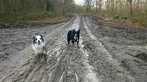best dog walking site oversley wood alcester traveller With best dog walking websites