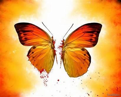 Butterfly Wallpapers Broken Hp Desktop Laptop Background