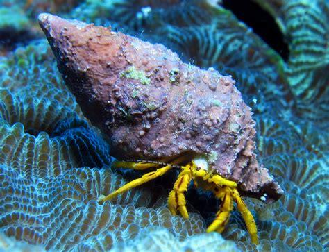 aquarium noyelles sous lens free images nature diving underwater seafood fauna coral reef invertebrate aquarium