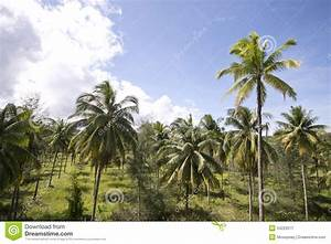 Coconut Trees In Garden Royalty Free Stock Photography ...