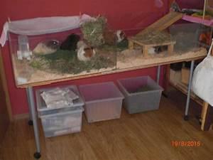Meerschweinchen Gehege Ikea : verkaufe gehege nur abholung in 91560 heilsbronn kleinanzeigen mfg und urlaubsbetreuung ~ Orissabook.com Haus und Dekorationen