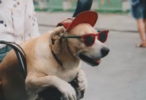 Hund MIT Brille