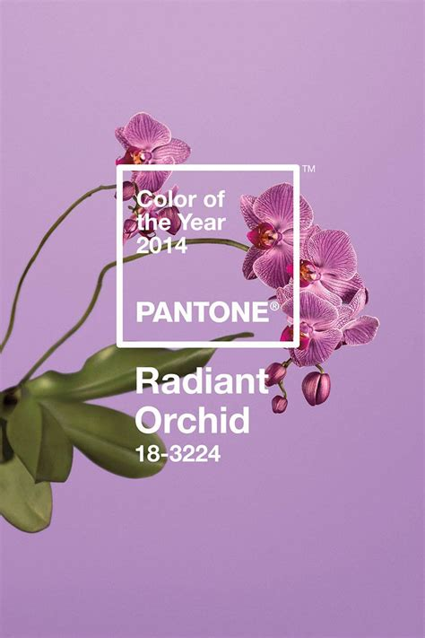 color of pantone color of the year 2014 radiant orchid carrie