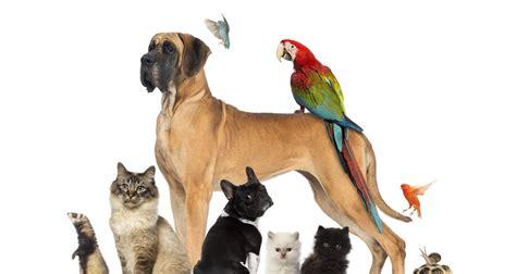 pat les animaux de compagnie march 233 des animaux de compagnie des opportunit 233 s animaux de compagnie un march 233 tendance