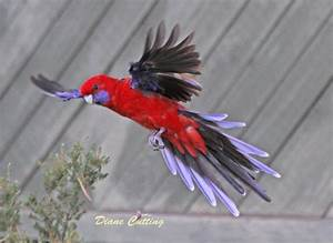 Bird of the Week: 17th June - Glitz and Glam | BIRDS in ...
