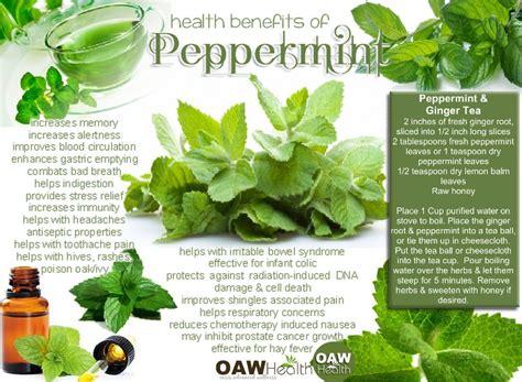 peppermint tea benefits health benefits of peppermint