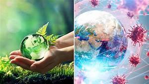 Environmental, Change, And, Covid