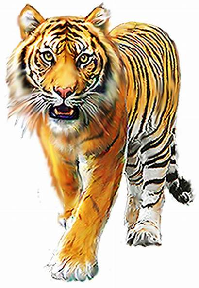 Tiger Editing Animals Cartoon Picsart Clipart Transparent