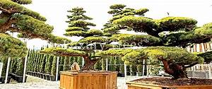 Sichtschutzpflanzen Für Terrasse : sichtschutz luxurytrees sterreich ~ Indierocktalk.com Haus und Dekorationen