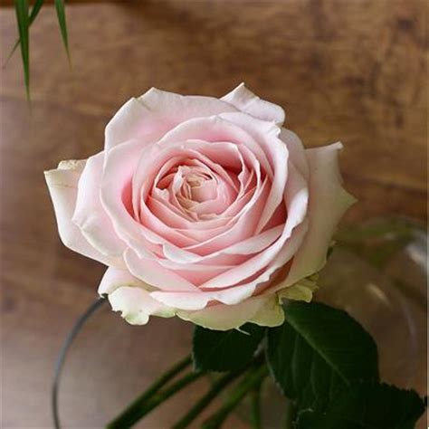 rose avalanche sweet achatvente rose coupees en vrac