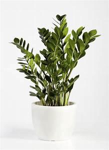 Ces Plantes D39intrieur Robustes Que Vous Pouvez Offrir