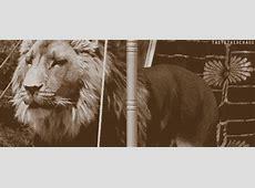 Narnia The Chronicles Of Narnia Fan Art 26167014 Fanpop