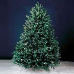 live christmas trees that come to you hammacher schlemmer blog
