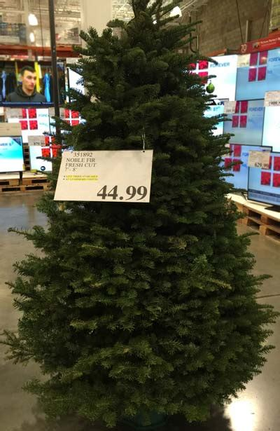 costco trees 2014 costco insider