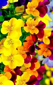Bright Flowers Wallpaper iPhone | 2020 3D iPhone Wallpaper