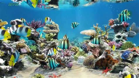 sim aquarium  wallpaper  desktop youtube
