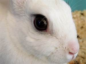 rabbit, eye, infections, and, care
