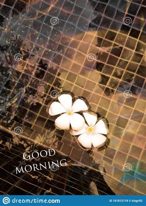 artistic images  good morning fachurodji
